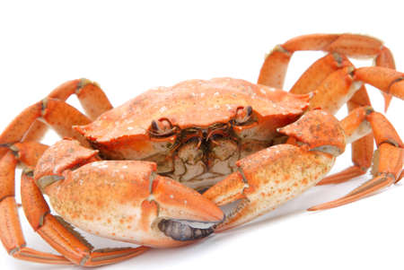 big red boiled crab isolated on white background Stock Photo - 18259716