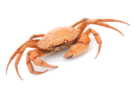 big red boiled crab isolated on white background Stock Photo - 18258912