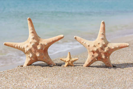 family holiday concept - sea-stars walking on sand beach against waves background Stock Photo - 18260145