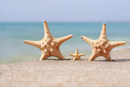 family holiday concept - sea-stars walking on sand beach against waves background Stock Photo - 18259816
