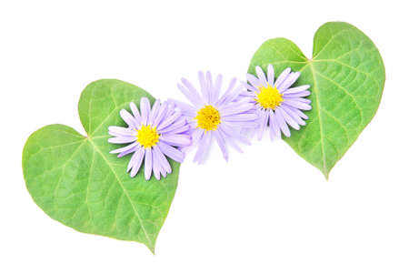 amity: love concept: pair of hearts from leaves and flower for happy valentine day or card. Stock Photo