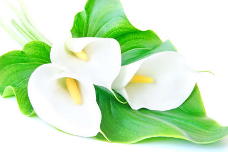 three white Calla lilies bouquet with green leaf isolated on a white background photo