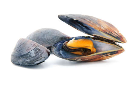 group of boiled mussels in shells isolated on white background 스톡 콘텐츠
