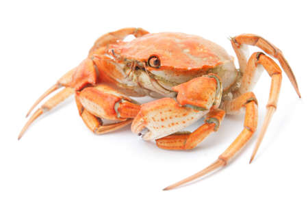 big red boiled crab isolated on white background photo
