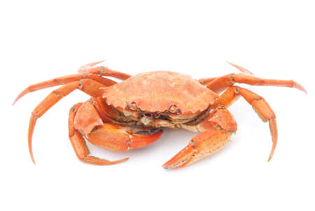 crab meat: big red boiled crab isolated on white background