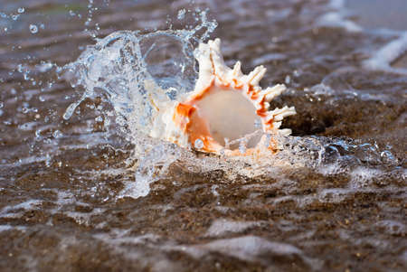 ostracean: seashell on beach in water splashes - sea background Stock Photo