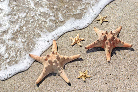 sea-stars lying on wet sand beach in sea wave - summer famity holidays concept Stock Photo