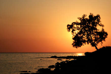 Bright beautiful yellow sea sunset with alone tree photo