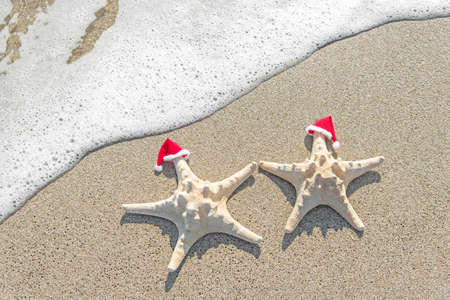 Sea-stars couple in santa hats on the sand. New Years and Christmas vacations at beach concept. photo