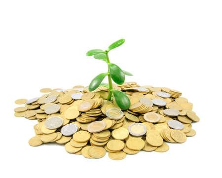 plant groeit uit gouden munten geïsoleerd op witte achtergrond