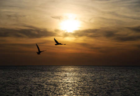 flying bird: Bright sunset panorama with flying birds under the sea surface