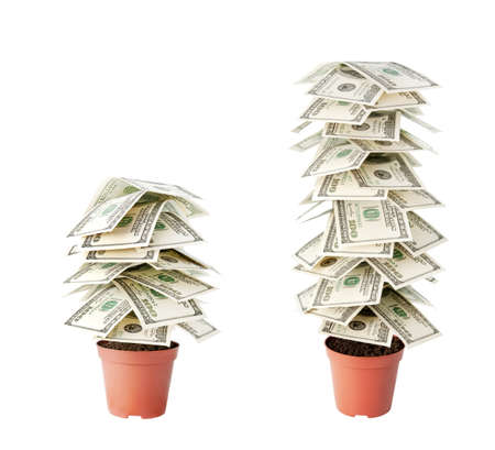 two dollar bill: money tree made of dollars isolated on white background Stock Photo