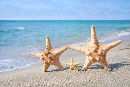 family holiday concept - sea-stars walking on sand beach against waves background photo