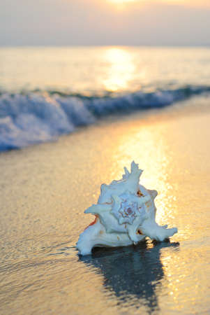 ostracean: seashell background on the sandy beach against waves and sunset Stock Photo