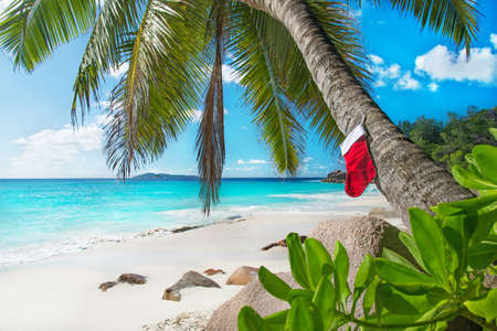 Christmas sock on palm tree at exotic tropical beach. Holiday concept for New Years Cards. Praslin, Anse Georgette, Seychelles