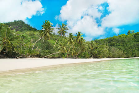 azure coast: Tropical beach Baie Lazare with palm trees at island Mahe, Seychelles - vacation background
