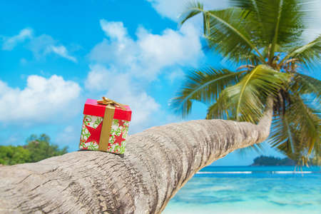 Gift box with bow on coconut palm tree at exotic tropical beach - holiday presents or discounts for travel tours concept Standard-Bild
