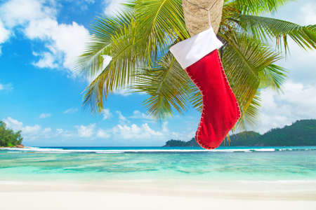 Christmas sock on palm tree at exotic tropical beach. Holiday concept for New Years Cards