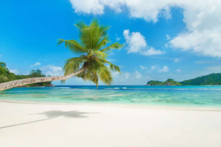 Tropical beach Baie Lazare with palm tree at island Mahe, Seychelles - vacation background