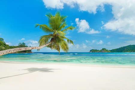 fruta tropical: Playa tropical Baie Lazare con la palmera en la isla de Mah�, Seychelles - fondo de vacaciones