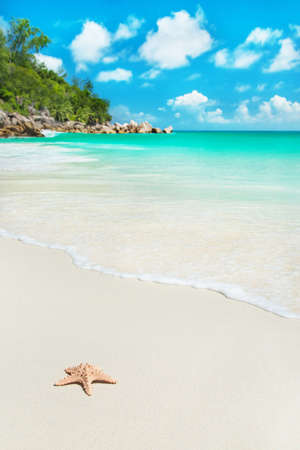 Sea star at tropical beach Anse Georgette at island Praslin, Seychelles - vacation background 스톡 콘텐츠