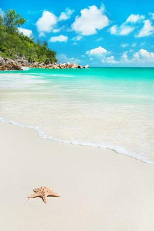 playas tropicales: Estrella de mar en la playa tropical Anse Georgette en la isla Praslin, Seychelles - fondo de vacaciones