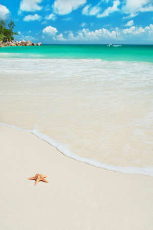 indian summer: Sea star at tropical beach Anse Georgette at island Praslin, Seychelles - vacation background Stock Photo