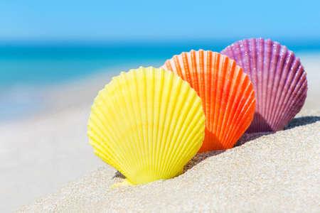petoncle: Trois coquillages colorés de pétoncles sur sable plage tropicale de l'océan en été journée ensoleillée - fond horizontale