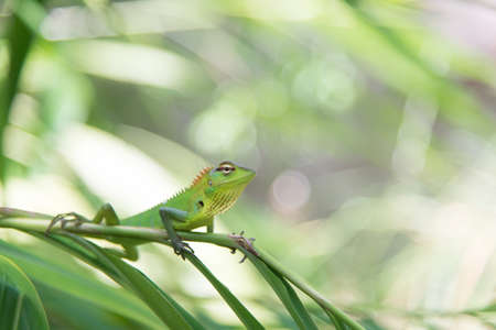 Green chameleon sitting on a tree branch in nature 스톡 콘텐츠