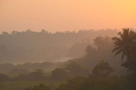 dampness: Wonderful sunrise above tropical palm jungle with sun rays ang thick morning fog
