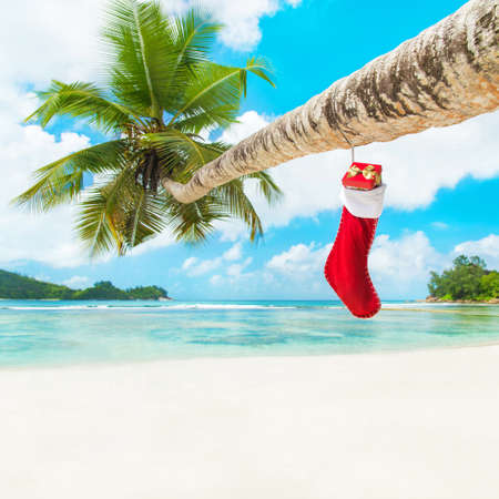 Christmas sock with gifts on palm tree at exotic tropical beach. Holiday concept for New Years Cards. Seychelles, Mahe photo