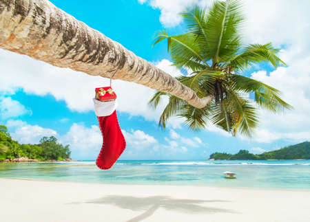 indian summer seasons: Christmas sock with gifts on palm tree at exotic tropical beach. Holiday concept for New Years Cards. Seychelles, Mahe