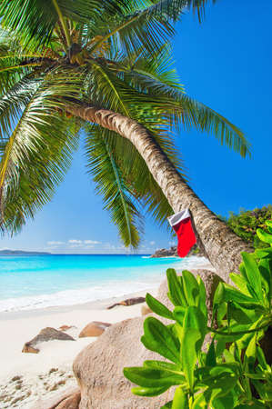 Christmas sock on palm tree at exotic tropical beach. Holiday concept for New Year Cards. Praslin, Anse Georgette, Seychelles 스톡 콘텐츠