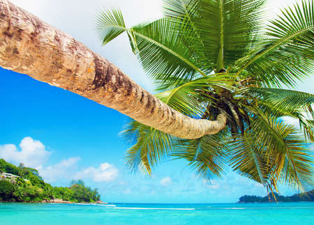 Perfect tropical coconut palm beach Baie Lazare, one of the most beautiful beaches in the world, Mahe island, Seychelles, gem of the Indian Ocean