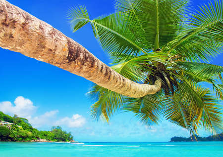 Perfect tropical coconut palm beach Baie Lazare, one of the most beautiful beaches in the world, Mahe island, Seychelles, gem of the Indian Ocean shore
