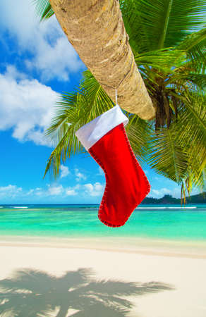 Red Christmas sock with presents on palm tree at exotic tropical ocean beach. Holiday concept for New Year and X-mas greeting Cards or winter travelling. Vertical natural winter background Stock Photo