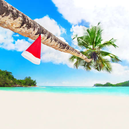 Red Santa hat on coconut palm tree at perfect tropical white sandy ocean beach.