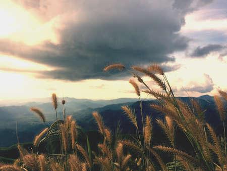 Grass field on mountain