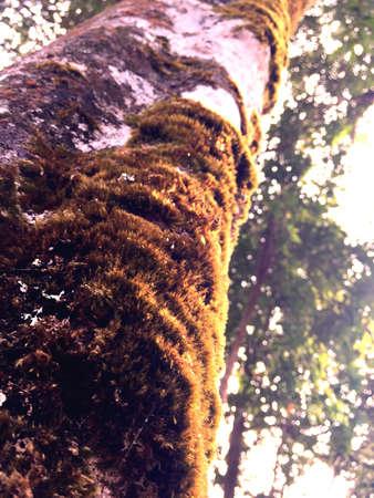 close: Close up of tree Stock Photo