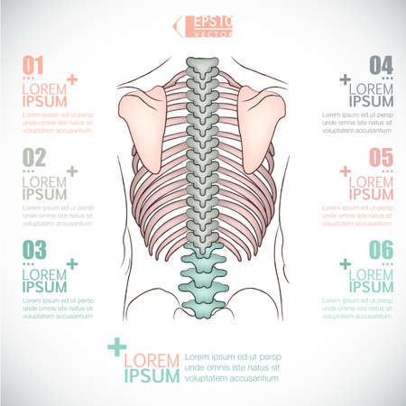 infographics of healthcarebackbone design Ilustracja