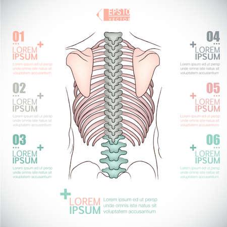 back ache: infographics of healthcarebackbone design Illustration
