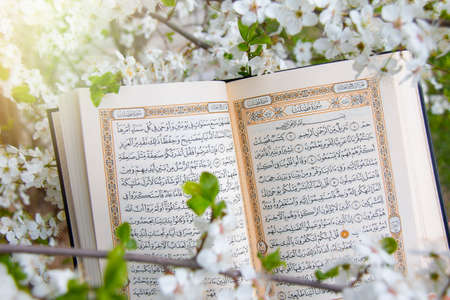Holy book of Muslims around the world. An open page of Quran 版權商用圖片