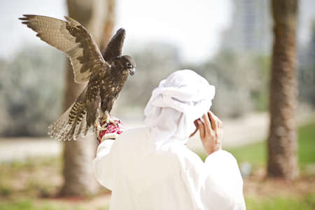 falconry: Falcon tries to run away from a falconry while he is talking with a mobile.