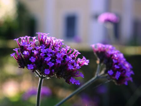 elongated: lile flower