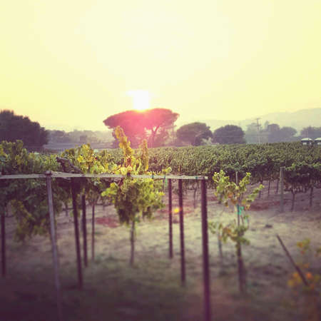 napa valley: Napa Valley Sunset