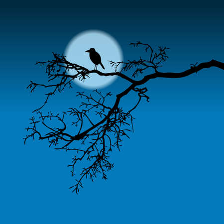 Raven on a branch, night illustration, silhouette