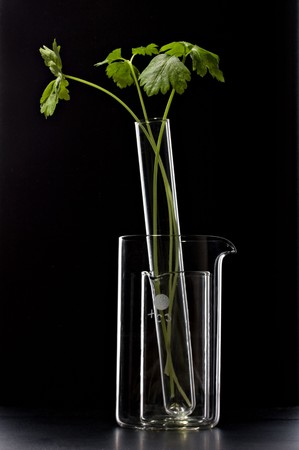 green plant investigation in laboratory test-tube