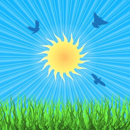 Nature landscape with birds, sun and green grass  background  Ilustração