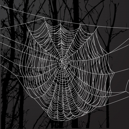 Realistic spider web over black background with tree. Vector