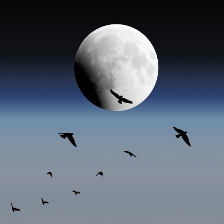 black bird: Background with sky, moon and birds